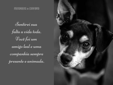 Mensagens Para Cachorro Que Morreu Mensagens De Conforto